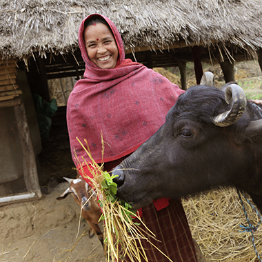 A woman shows off her water buffalo.