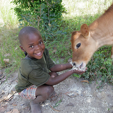 A boy and his new cow friend
