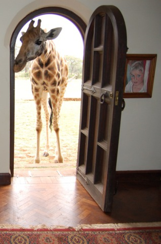 Giraffe At The Front Door Of Giraffe Manor (Photo by Unknown/Creative Commons via Wikimedia)