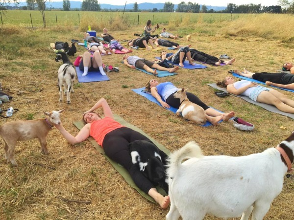 Goat Yoga Could Be The Next Big Health & Wellness Graze