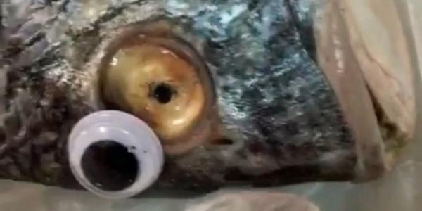 Kuwaiti Fishmonger Busted For Putting Googly Eyes On Old Fish
