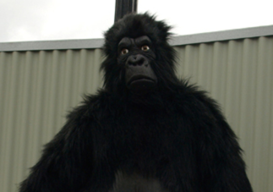 Man in a Gorilla Suit (Photo by Internets Dairy via Wikimedia/Crative Commons)