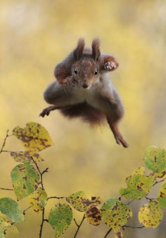 Comedy Wildlife Photography Award: Highly Commended, Julian Rad, Photographer