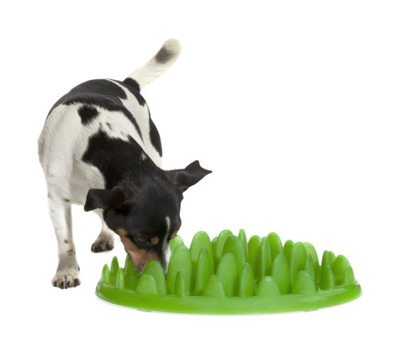 Dog using the Green Interactive Feeder