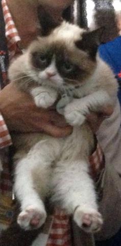 Grumpy Cat a.k.a. Tardar Sauce (Photo by David Berkowitz/Creative Commons via Wikimedia)