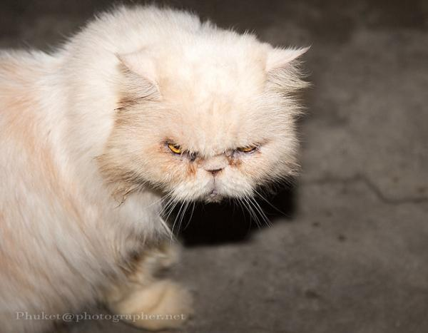 Diabeetus Shrimp-Eating Cat: The Internet's Top 10 Grumpiest Cats