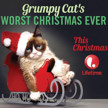 Grumpy Cat The Star: Source: Hollywoodreporter.com