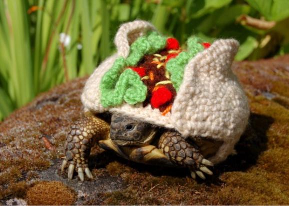 Taco turtle (Image via The Guardian)