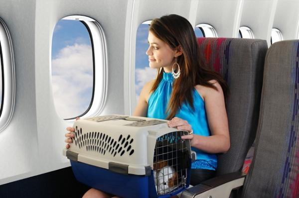 Chinese Airline Allows Pets In Passenger Cabins