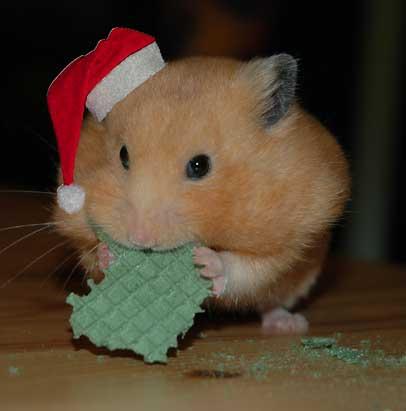 Christmas Hamster (Photo by Mader Andrea/Creative Commons via Wikimedia)