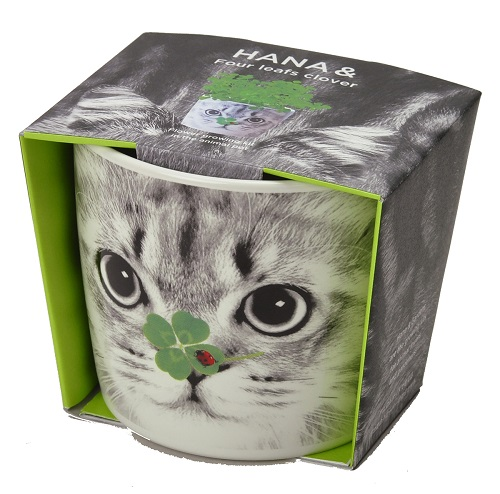 Hana & Animals plant pot kits