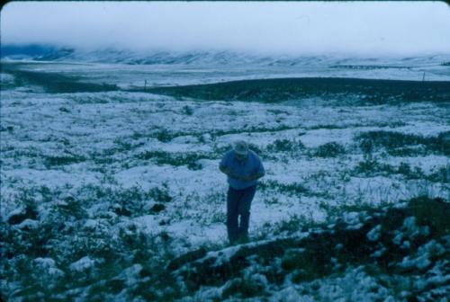 Looking for Butterflies in July along Alaska's Ice Road