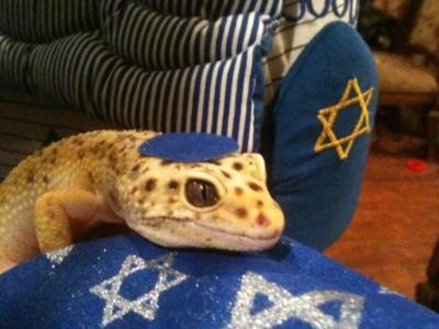 Hanukkah Gecko (Image via Tumblr)