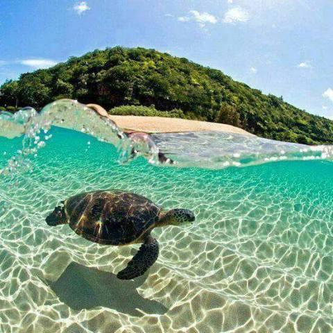 Hawaiian Green Sea Turtle (Image via Beautiful Amazing World)