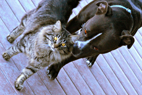 askPETMD App Makes it Easier for Pet Owners to Recognize Emergencies: Dogs and cats can both benefit from the askPETMD app