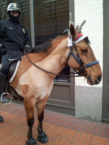 Portland Police Mounted Unit Ready For Christmas (Photo by Another Believer via Wikimedia/Creative Commons)
