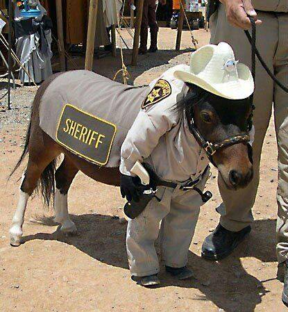 Horse Sheriff (Image via Professional Roughstock Series)