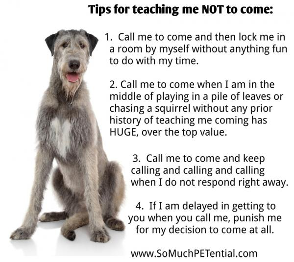 What not to do when training your dog