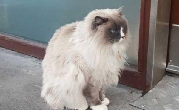 Iceland's Most Famous Cat Poses For Photos, Robs Grocery Stores