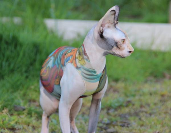 Tattoo Sleeves For Cats Are Like Inks For Your Sphynx