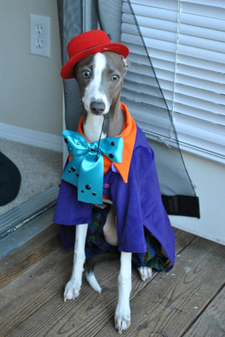 Joker Dog costume: © SewingArt by Orchid