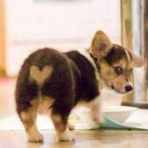 Cute Puppy Popo (Photo via ilovedogs.tv)