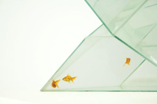 Infinity Aquarium by BCXSY, close-up