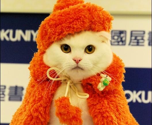 Another Fashion Cat by Takako Iwasa