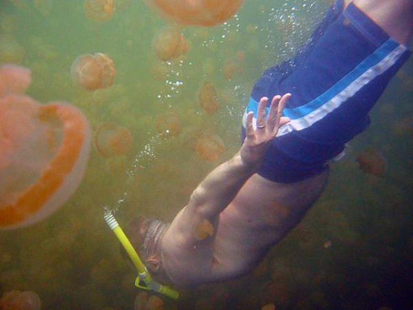 Palau's Jellyfish Lake Reopens As Polyp Population Rebounds