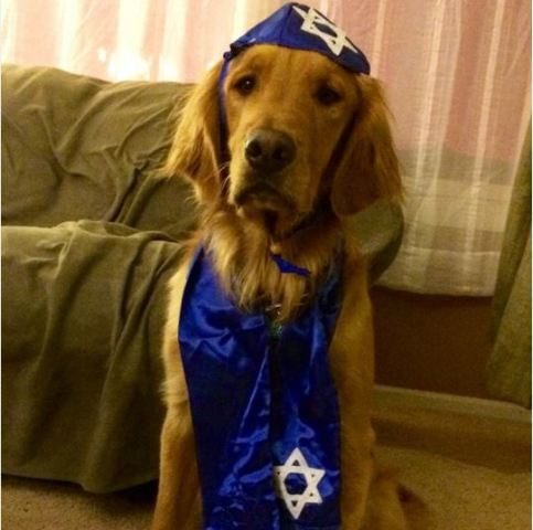 Dog in Yarmulke and Tallis