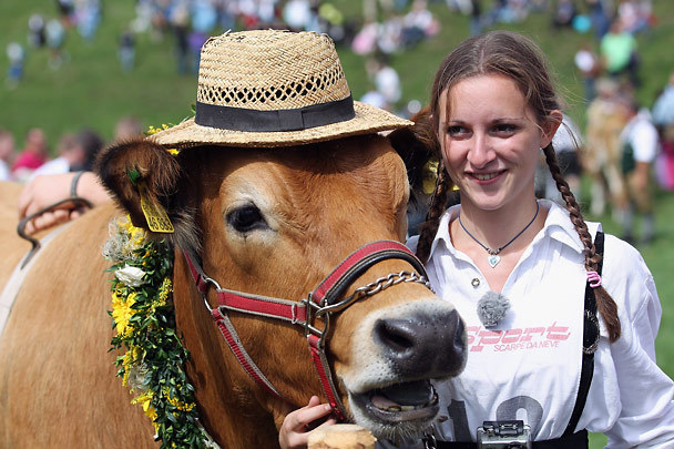 Opening cermonies began with a parade of flower drenched cows and lederhosen clad jockeys.: photo by Johannes Simon/Getty Images