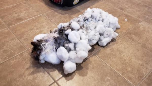 Cat Found Frozen In Montana Snowbank Makes Full Recovery