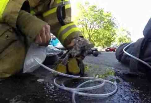 Fire Fighter Cory Kalanick Works To Save A Kitten's Life (You Tube Image)