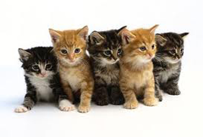 Adorable kittens: Source: kitty-baynet.com