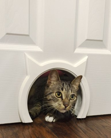 10 truly amazing cat doors and entryways. Black Bedroom Furniture Sets. Home Design Ideas