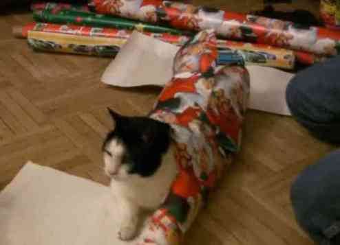 How to Wrap a Cat (You Tube Image)