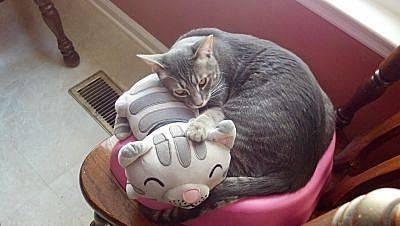 Soft Kitty Singing Plush Toy