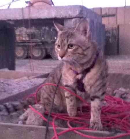Koshka In Afghanistant (You Tube Image)