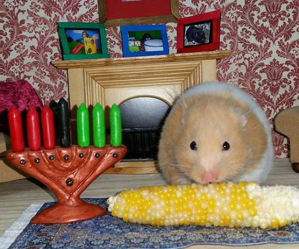 The Top 7 Pets & Animals Of Kwanzaa