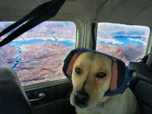 5 best pet carriers and tips for safer airline cargo for Traveling on a plane with a dog