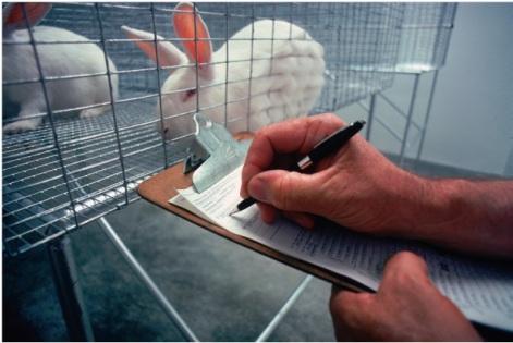 Laboratory Rabbits (Public Domain Image)