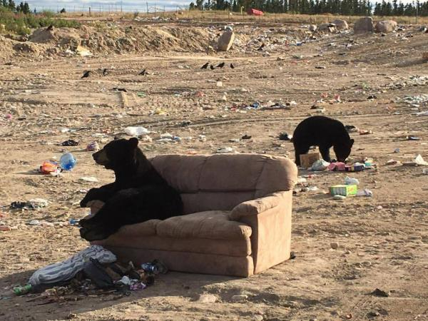 Bear Snapped Sitting On Dumped Sofa