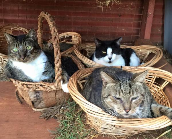 Lanai Cat Sanctuary -- Quality of Life!