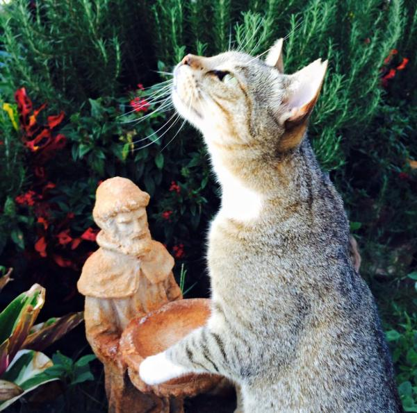 Lanai Cat Sanctuary -- Did I Just See a Bird?