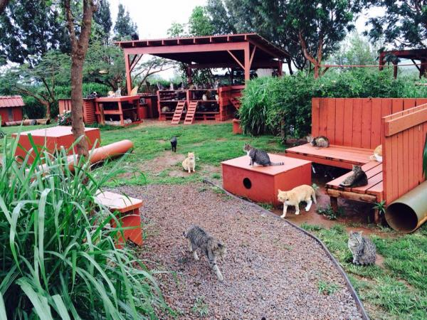 Lanai Cat Sanctuary -- Cats Play
