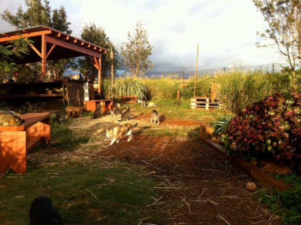 Lanai Cat Sanctuary -- Life in Paradise