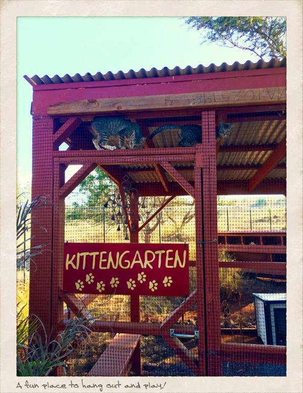 Lanai Cat Sanctuary -- Kittengarten