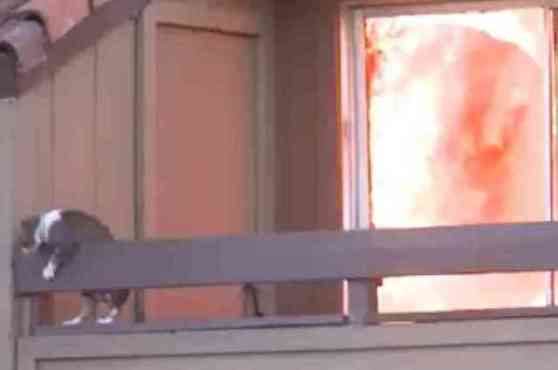 Cat Prepares to Leap from Balcony (You Tube Image)