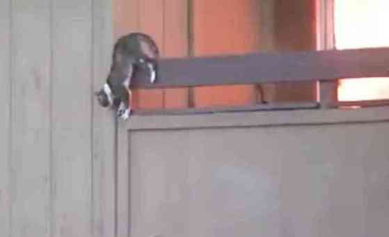 Cat Measures its Leap from the Burning Building (You Tube Image)