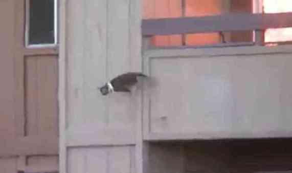 Cat in Midair (You Tube Image)